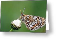 Butterfly And White Flower Greeting Card