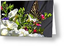 Swallowtail Butterfly On White Petunia Flower Greeting Card