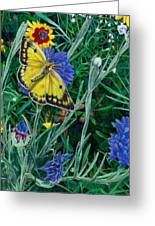 Butterfly And Wildflowers Spring Floral Garden Floral In Green And Yellow - Square Format Image Greeting Card