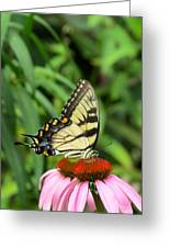 Butterfly Greeting Card by Andrea Dale