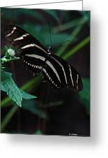 Butterfly Art 2 Greeting Card