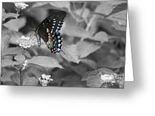 Butterfly Art Wings Together Greeting Card