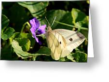 Butterfly At Flower Greeting Card
