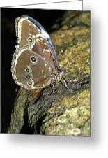 Butterfly At Night Greeting Card