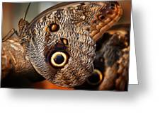Butterfly At Rest Greeting Card