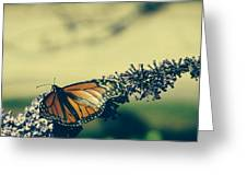 Butterfly At Royal Botanical Gardens Greeting Card