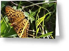 Butterfly At Signal Mountain Greeting Card