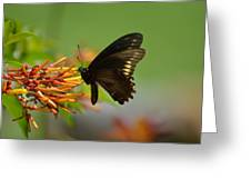 Butterfly Away Greeting Card