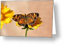 Butterfly Baby Greeting Card