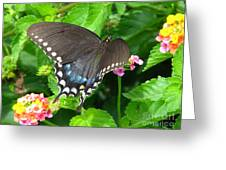 Butterfly Ballot Greeting Card