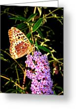Butterfly Banquet 2 Greeting Card
