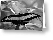 Butterfly Bat Greeting Card