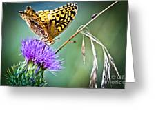 Butterfly Beauty And Little Friend Greeting Card