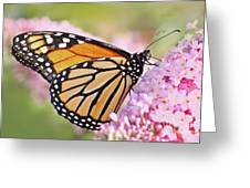 Butterfly Beauty-monarch II  Greeting Card