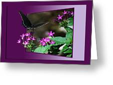 Butterfly Black 16 By 20 Greeting Card