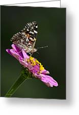 Butterfly Blossom Greeting Card
