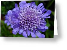 Butterfly Blue Pincushion Flower Greeting Card