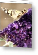 Butterfly Bush Butterfly Greeting Card