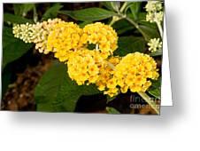 Butterfly Bush Flower Greeting Card
