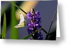 Butterfly - Cabbage White Greeting Card