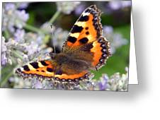 10088 Small Tortoiseshell Butterfly Greeting Card