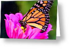 Butterfly Cup Greeting Card