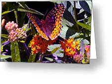 Butterfly Don't Fly Away Greeting Card