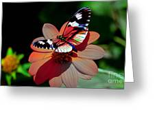 Butterfly Dont Fly Away Greeting Card