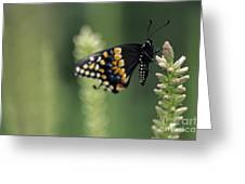 Butterfly E. Black Swallowtail Greeting Card
