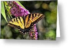 Butterfly - Eastern Tiger Swallowtail Greeting Card