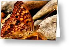 Butterfly Enchantment Greeting Card