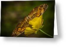 Butterfly Fan Greeting Card