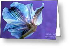 Butterfly Flower Greeting Card