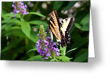 Butterfly Garden 2 Greeting Card