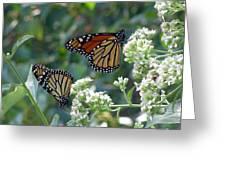 Butterfly Garden - Monarchs 01 Greeting Card