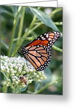 Butterfly Garden - Monarchs 07 Greeting Card
