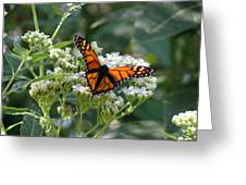 Butterfly Garden - Monarchs 09 Greeting Card