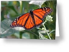 Butterfly Garden - Monarchs 10 Greeting Card