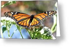 Butterfly Garden - Monarchs 13 Greeting Card