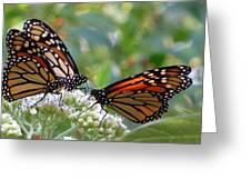 Butterfly Garden - Monarchs 17 Greeting Card