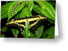 Butterfly Generations Greeting Card