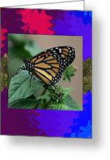 Butterfly Gold Photograph Insect Taken At Costa Rica Travel Vacation Unique Digital Painted Border B Greeting Card