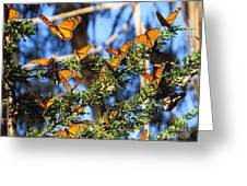 Butterfly Goodbye Greeting Card