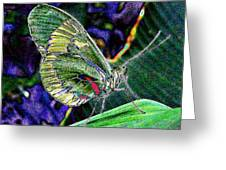 Butterfly Green Greeting Card