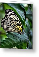 Butterfly - Green Leaf Greeting Card