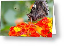 Butterfly Hanging Out On Wildflowers Greeting Card