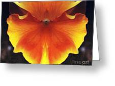 Butterfly Impression Greeting Card