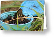 Butterfly In A Cup Greeting Card