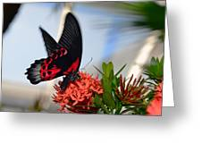 Butterfly In Action Greeting Card