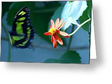 Butterfly In Flight Greeting Card